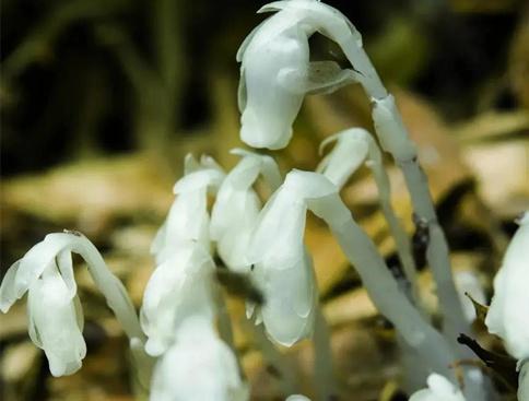 植物 腐生 腐生植物和共生植物之间的区别